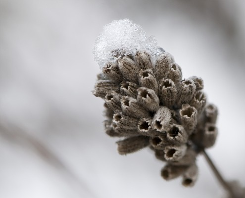 Depth of Field Winter Macro