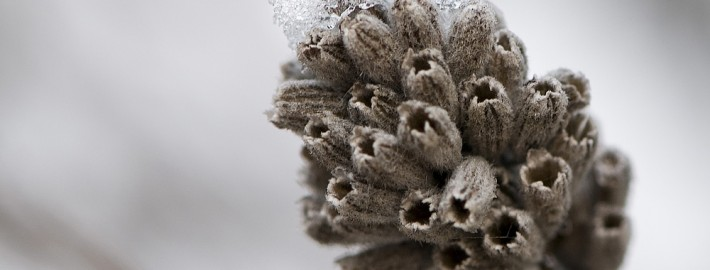 Depth of Field Winter Macro